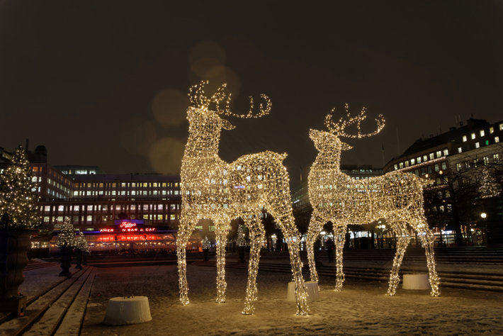 Reindeer in Christmas lights