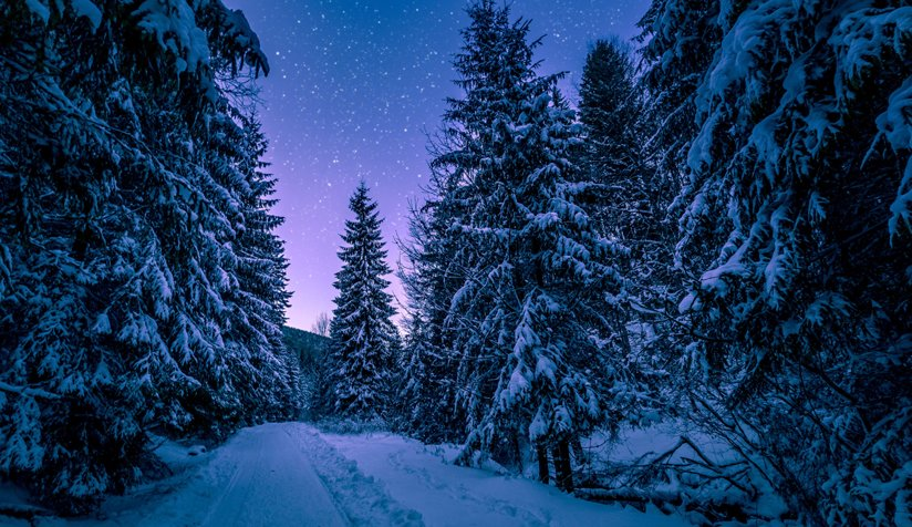 Trees, snow and stars
