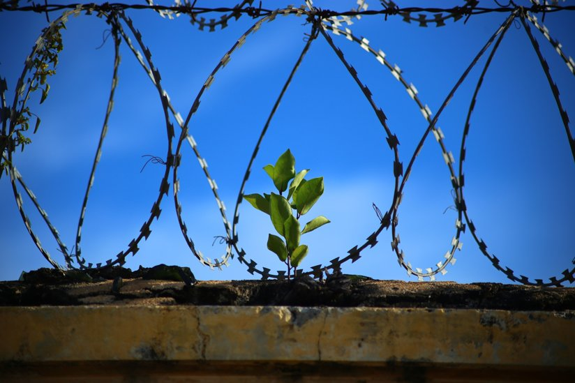 A plant behind a barbed wire