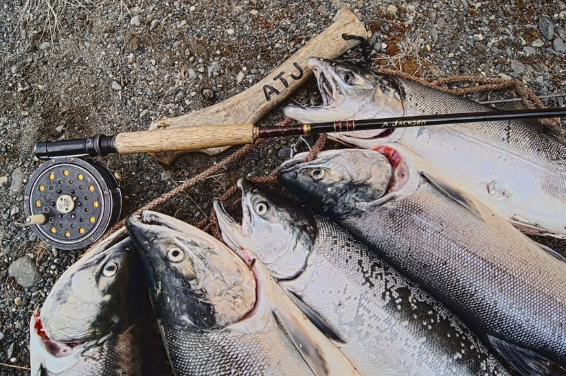 Several salmon on a hook